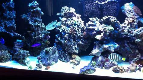 rockscape or aquascaping on 240 gallon reef aquarium