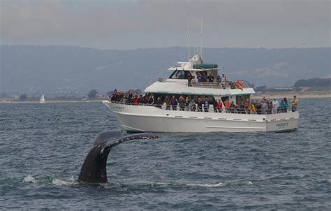 Monterey Whale Watching Boats by Monterey Bay Whale Watching Santa Cruz Whale Watching