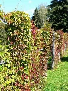 Sichtschutz Pflanzen Blühend : hecken gartenratgeber ~ Markanthonyermac.com Haus und Dekorationen