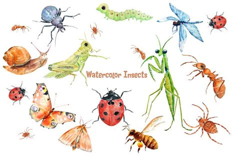 Watercolor Insects And Spider  Illustrations On Creative Market