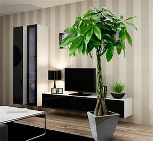 Pflanzen Für Wohnzimmer : moderne zimmerpflanzen als frische deko f rs zuhause ~ Markanthonyermac.com Haus und Dekorationen