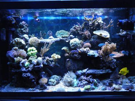 aquarium 224 eau de mer