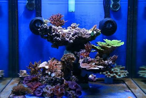 top reef tank aquascapes my 2m reef reef aquascaping tops and tanks