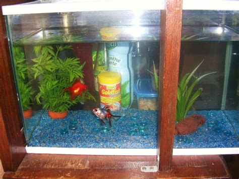 aquarium poisson eau froide