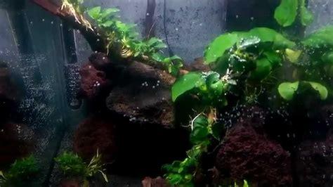 nano cube 40 liter aquascape lava rock anubias barteri