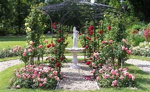 Wann Wächst Rasen : rosen pflanzen garten rasenpflege ~ Markanthonyermac.com Haus und Dekorationen