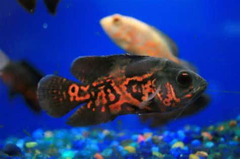 aquatic zoo fresh water fish store aquarium maitenance salt water tropical fish store and