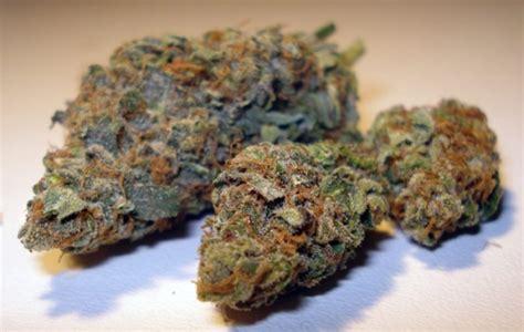 cours pour planter de la beuh sans le culture indoor cannabis