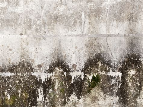 Learn About Mold  FreshStart Restoration
