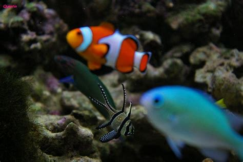poisson exotique d aquarium en eau de mer photo max
