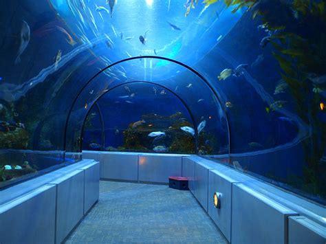 canadian geographic photo club tunnel aquarium