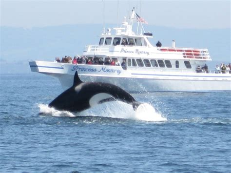 Monterey Whale Watching Boats by Princess Monterey Whale Watching Yelp