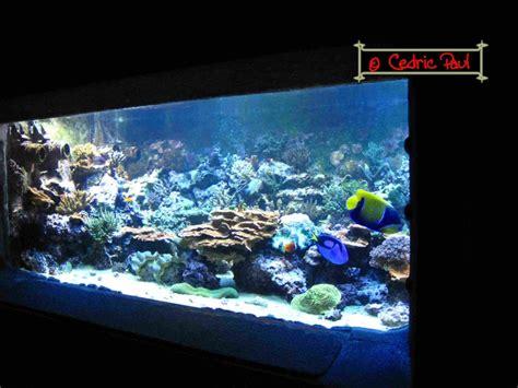 imperator aquarium d amn 233 ville moselle 54 aquariums publics fiche et documentation l