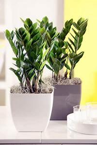 Pflanzen Die Wenig Licht Brauchen Heißen : zimmerpflanzen garten einebinsenweisheit ~ Markanthonyermac.com Haus und Dekorationen