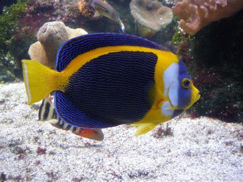 poisson de l aquarium de la rochelle 6