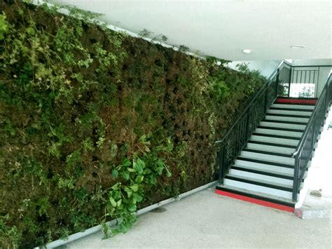 mur vegetal png cr 233 ateur de mur v 233 g 233 talis 233