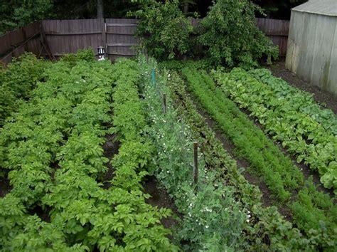 Vegetable Garden Ideas In Your Yard  Margarite Gardens
