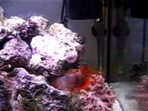 poisson clown microrecif 96l aquarium eau de mer