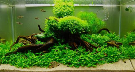 live plants aquarium beginner aquarium design ideas