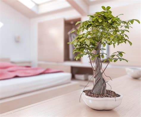 top 5 ways to bring feng shui into your cleaning