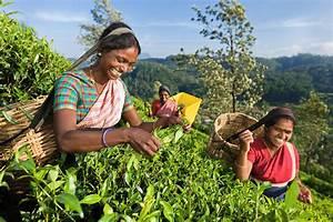 Sri Lanka Immobilien : pcc small group tours in 2016 vietnam sri lanka thailand and cambodia ~ Markanthonyermac.com Haus und Dekorationen