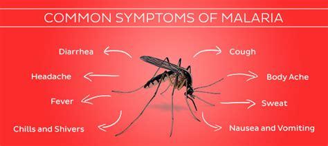 Malaria  Oyibos Online. Cursive Signs Of Stroke. Used Building Construction Signs Of Stroke. Stroke Prevention Signs. Antique Kitchen Signs Of Stroke. Stick Signs Of Stroke. Disabled Parking Signs Of Stroke. No Smoking Signs. Restuarant Signs