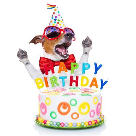 Funny Happy Happy Birthday Pictures Impremedianet