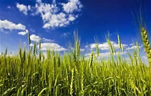 The future of farming: GM crops on organic farms ...