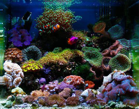demartini 2008 featured nano reefs featured aquariums monthly featured nano reef aquarium