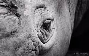 Rhinoceros Eye Close-Up wallpaper | 1920x1200 | #14111