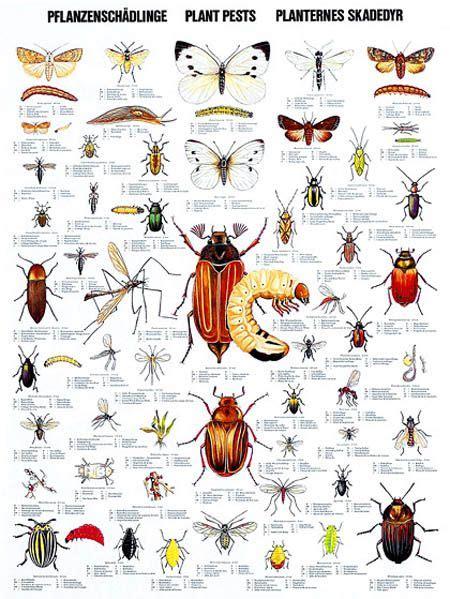 Garden Pests Garden Pest Detective Identify Plant