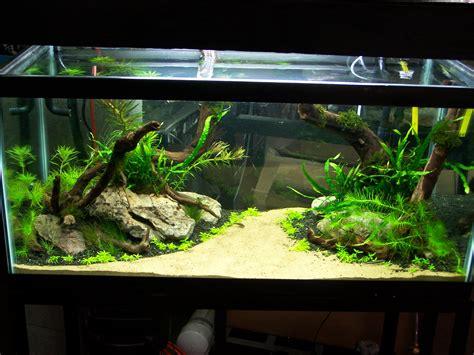 1000 images about aquariums on aquarium aquascaping and fish tanks