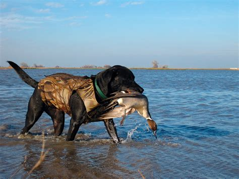 Duck Hunting Boats Made In Ohio by Duck Hunting Mendota Wildlife Area Game Fish