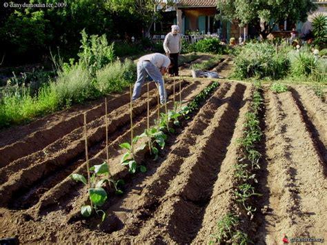 plantation des aubergines piments courgettes et concombres potager et fruitiers les galeries