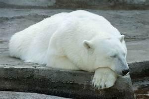 In Welche Himmelsrichtung Schlafen : wissenstest wie schlafen die tiere ~ Markanthonyermac.com Haus und Dekorationen
