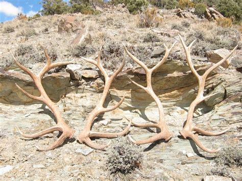 big elk sheds monstermuleys