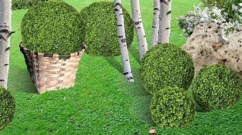 planter et cr 233 er un massif de buis en boule