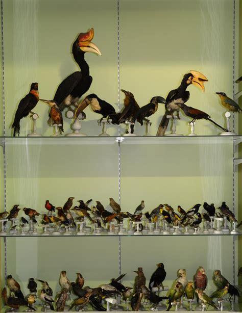 salle d histoire naturelle mus 233 e de valence