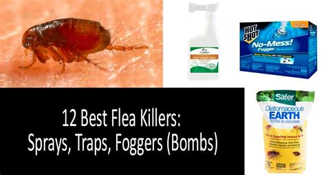 Raid Flea Plus Carpet And Room Spray Directions