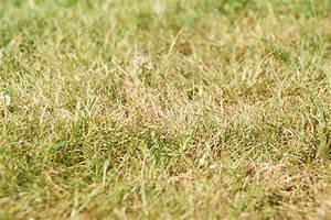 Alternative Zu Gras Garten : verbrannter rasen wie rette ich meinen rasen das gartenmagazin ~ Markanthonyermac.com Haus und Dekorationen