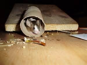 Mäuse Im Keller : inspirierend farbmaus spielzeug selber machen tierspielzeug ~ Markanthonyermac.com Haus und Dekorationen