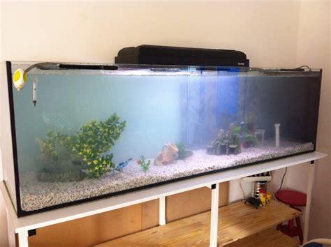 quel poisson et combien pour mon 600 litres