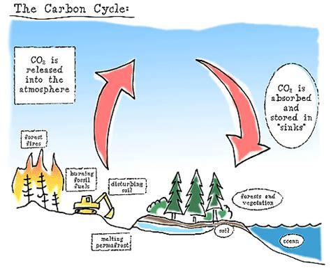 mangrove as carbon sinks mangrove squad