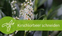 Kirschlorbeer Wann Schneiden : pflanzen schneiden ber 20 anleitungen im pflanzenschnitt magazin ~ Markanthonyermac.com Haus und Dekorationen