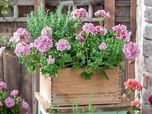 Die Schönsten Balkonpflanzen : gestaltungsideen mit geranien bunter blumenkasten pinterest witterung balkonpflanzen und ~ Markanthonyermac.com Haus und Dekorationen