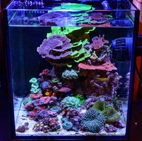 teenyreef s 10g fusion struggling for balance members aquariums nano reef forums