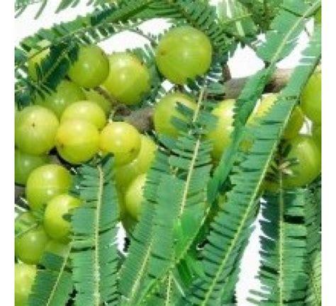 Best Online Fruit Tree Nursery Thenurseries