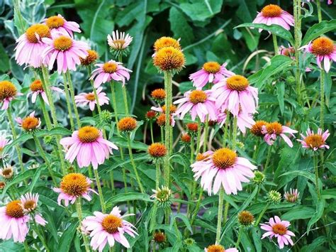 your potted plants can also be perennials