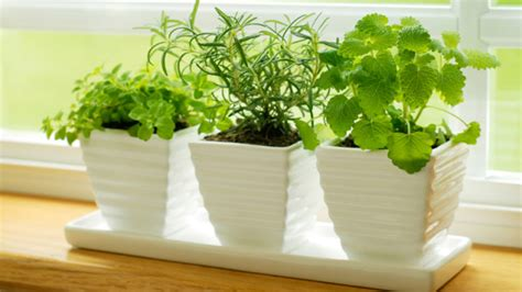 10 Famous And Easy Herbs To Grow Indoor During Wintermake