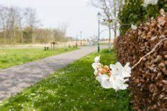 Kirschlorbeer Wann Schneiden : hainbuchenhecke schneiden wann ist der beste zeitpunkt ~ Markanthonyermac.com Haus und Dekorationen